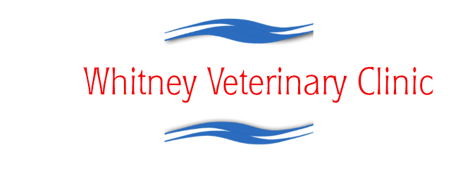 whitneyveterinaryclinic